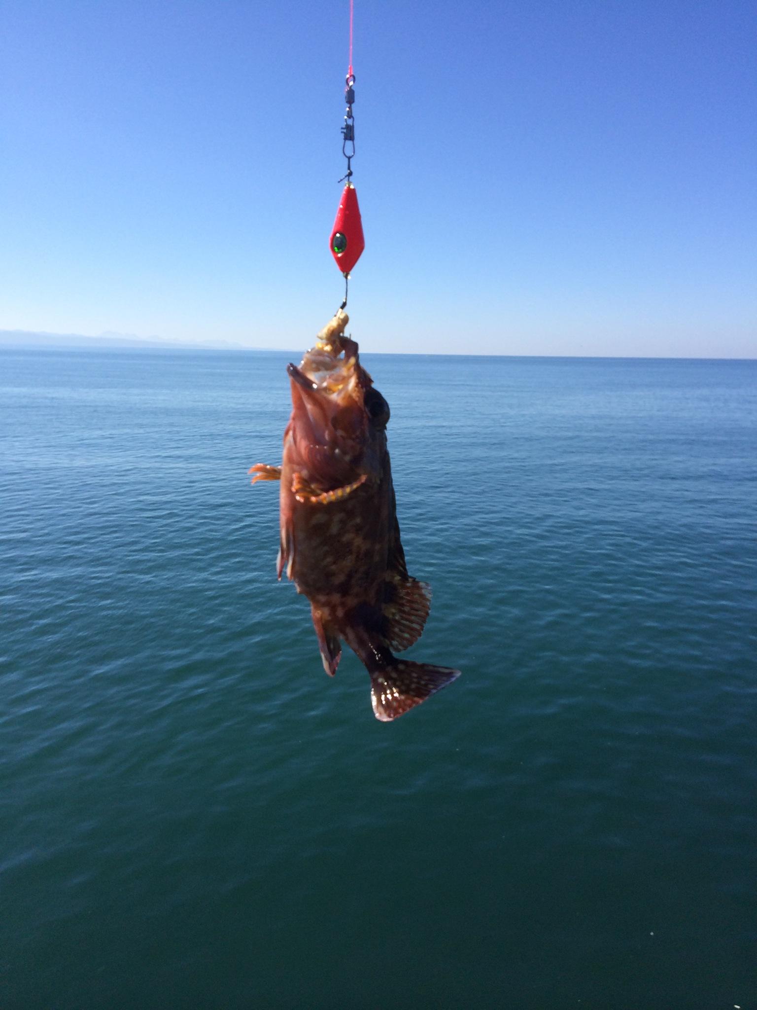 島根県出雲市 大社漁港でカサゴ2匹 隙間時間フィッシング