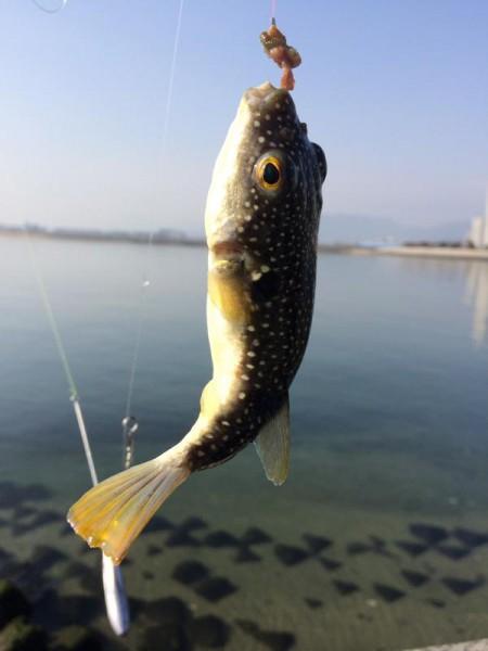 子供でも釣れるファミリーフィッシングと釣果-釣り納め3