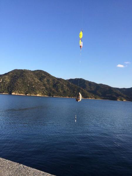 子供でも釣れるファミリーフィッシングと釣果-広島-7