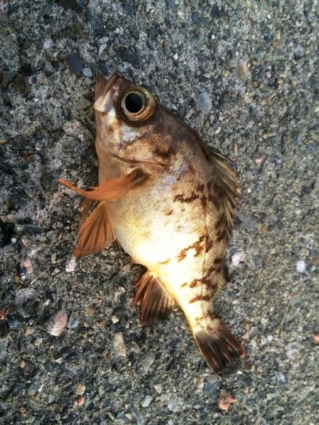 子供でも釣れるファミリーフィッシングと釣果-広島-13