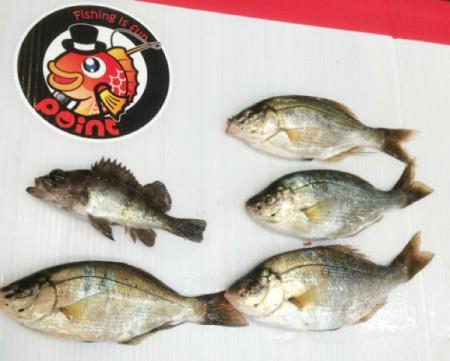 子供でも釣れるファミリーフィッシングと釣果-広島-16