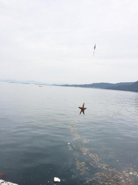 子供でも釣れるファミリーフィッシングと釣果-波止で鱚釣り13