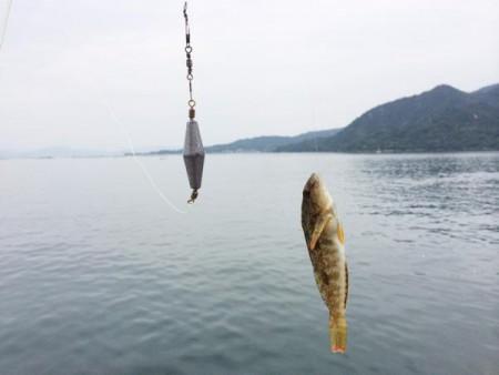 子供でも釣れるファミリーフィッシングと釣果-波止で鱚釣り11