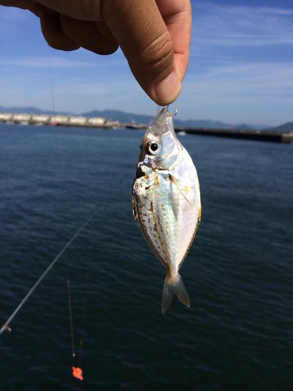 本日の釣果はヒイラギ一匹・甲イカは見送り。。広島の釣りポイントを色々巡り・・