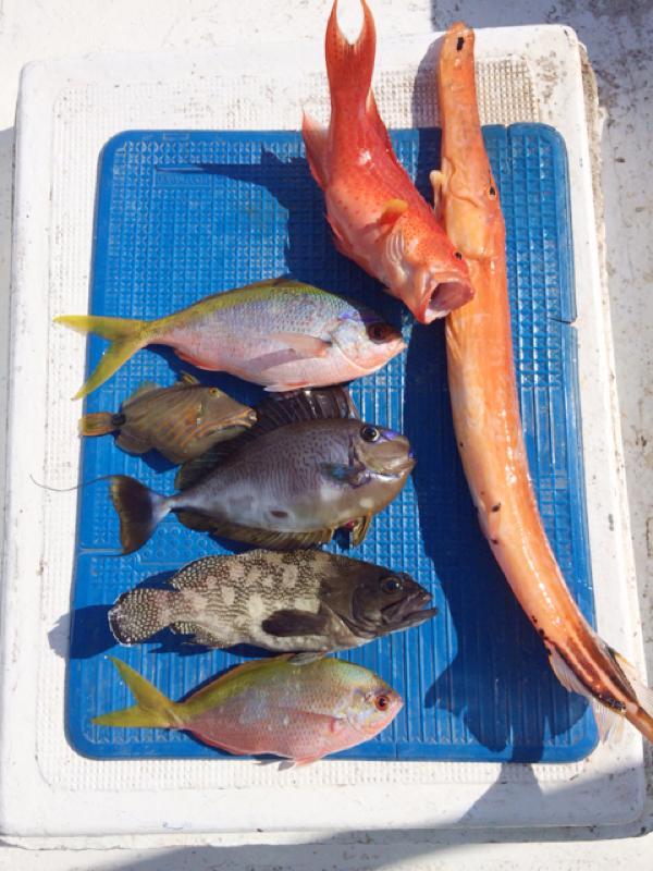 石垣島で船釣り^^大漁〜^^ハタなども釣れました〜^^
