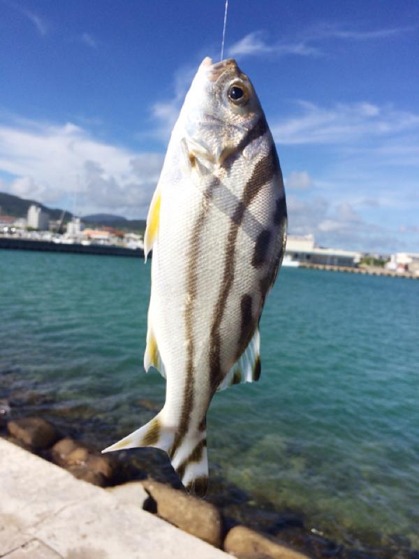 魚種判明^^石垣島でチョイ投げで釣れた◯◯^^