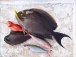 石垣島で船釣り^^大漁〜^^ハタやカワハギなども釣れました〜^^